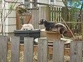 Urban goats.jpg
