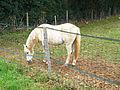 Ury-77477-cheval-03.JPG