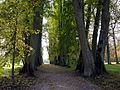 VU botanikos sodas, liepu aleja, 2006-10-18.jpg