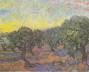 Olive Grove: Orange Sky