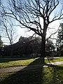 Vandybicentennialtree.jpg