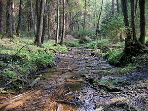 Dainava Forest