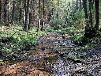Dainava Forest - Image: Varene springs