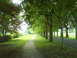 An avenue in Varennes-le-Grand