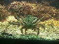 Venezia - Museo di storia naturale - aquarium - crab.JPG