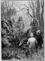 Verne - Le Superbe Orénoque, Hetzel, 1898, Ill. page 49.png