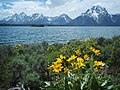 View from Hermitage Point Trail on Jackson Lake.jpg