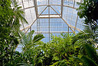 View to roof in center of Palm House, Kew Gardens.jpg