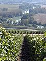 Vigne Pinot noir (Vue sur la Marne) Cl.J.Weber (23382026340).jpg