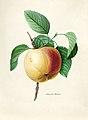 Vintage Flower illustration by Pierre-Joseph Redouté, digitally enhanced by rawpixel 84.jpg