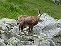 Vysoké Tatry, Dolina Bielej vody, cestou od Zeleného plesa na Jahňací štít (34).JPG