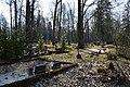 WMEE-exp2019-(067) Rõuge kalmistu.jpg