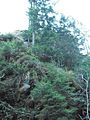 Wandern im November in Todtmoos - panoramio (24).jpg