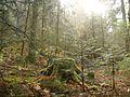 Wanderung im November - panoramio (35).jpg