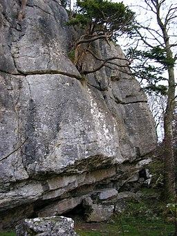 Warton Pinnacle Crag - geograph.org.uk - 1586580