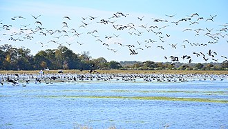 Arkansas County, Arkansas - Waterfowl near Bayou Meto