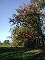 Weatherhill Plantation - geograph.org.uk - 612238.jpg