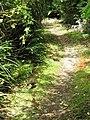Weka chicks, Heaphy Track, NZ.jpg