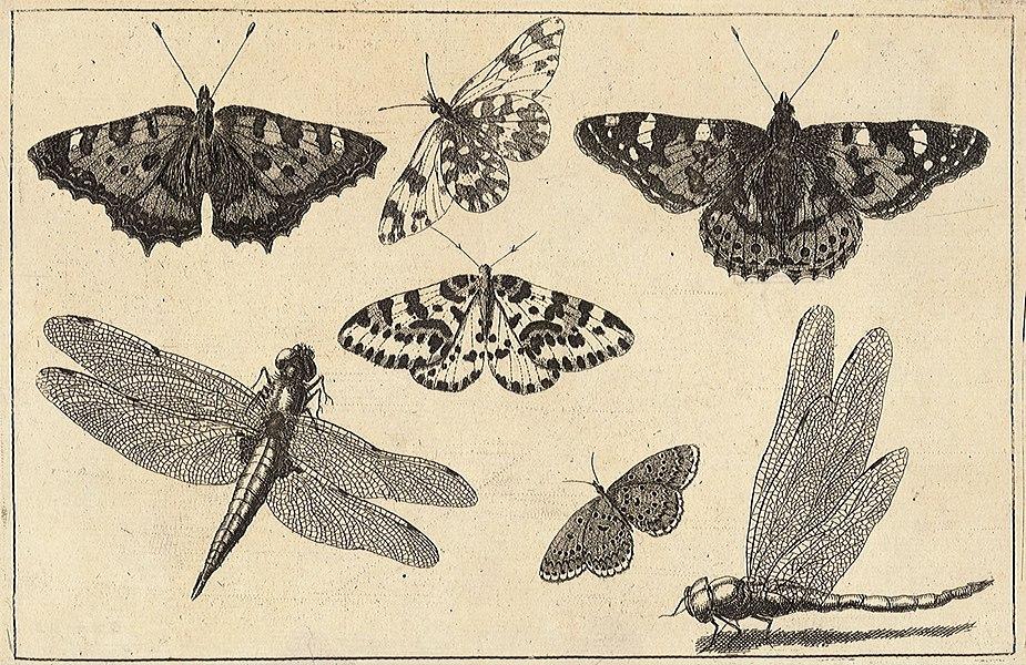 butterflies - image 2