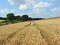 Wheat, Wherwell - geograph.org.uk - 909748.jpg