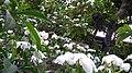 White heavenly flowers.jpg