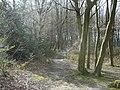 Widmore Wood, Hemel Hempstead - geograph.org.uk - 365294.jpg