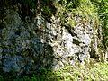 WikiProjekt Landstreicher Südhang Grünten 03.jpg