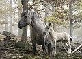 Wildpferde Tripsdrill.jpg