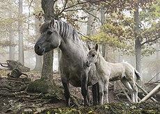 http://upload.wikimedia.org/wikipedia/commons/thumb/0/09/Wildpferde_Tripsdrill.jpg/230px-Wildpferde_Tripsdrill.jpg