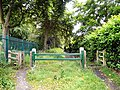 Willow Grove - geograph.org.uk - 1360238.jpg