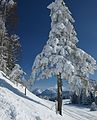 Winterstaude Niedere 1.JPG