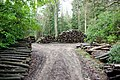 Wood Stacks - geograph.org.uk - 322234.jpg
