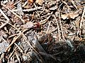 Wood ants with food.jpg