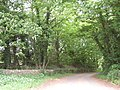 Woodland fringe of Selaby estate - geograph.org.uk - 458993.jpg