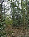 Woodland on north side of Hertford Road near Digswell, Hertfordshire - geograph.org.uk - 166601.jpg