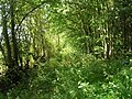 Woodland track, The Whin - geograph.org.uk - 2035766.jpg