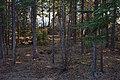 Woods at Little Atlin Lodge - Yukon Territory (12448287133).jpg