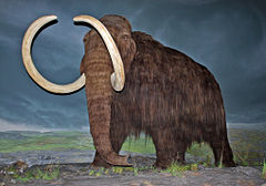 Woolly Mammoth-RBC.jpg