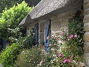 Roses, clematis, a thatched roof: cottage garden planting at Kerascoët, (Arrondissement of Quimper), Brittany