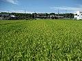Yamatoji Rural Landscape - panoramio - Nagono.jpg