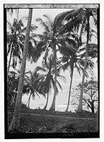 Zanzibar. LOC matpc.13846.jpg