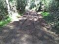 Zona de pinos en albufera.jpg