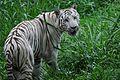 Zoológico recebe 3,5 mil visitantes no 58º aniversário (23566487765).jpg