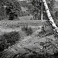 """""""Mosnince"""" (bruna) na poti v Brezen 1963.jpg"""