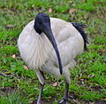 (1)Ibis Centennial Park-1.jpg