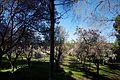 ®s K3 SD ┼ MADRID KATRESYA PQUE. QUINTA de los MOLINOS - panoramio (1).jpg