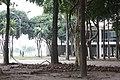 Árvores no prédio da reitoria da UFRJ.jpg