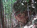Šútovská dolina 6 MF3.jpg