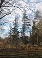 Ботанічний сад, вул. Пирогова, 155.jpg
