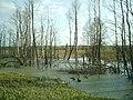 Водное-лесное законодательство. - panoramio - Рубцов Алексей (9).jpg